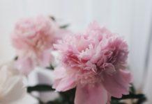 kwiaty Dzień Mamy